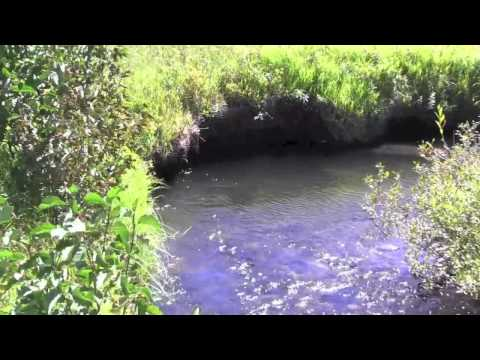 Blacktail Creek - Tenkara Lite - Yellowstone
