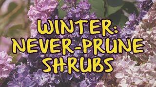 Winter: Never Prune Shrubs