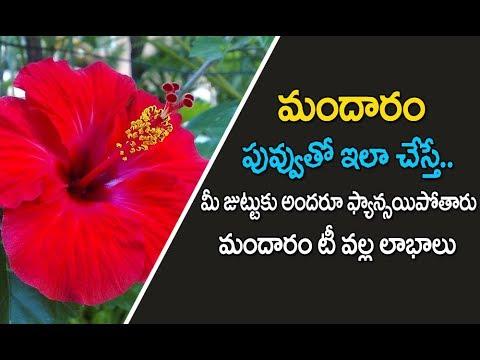 Hibiscus Flower Benefits In Telugu మదర పవవ