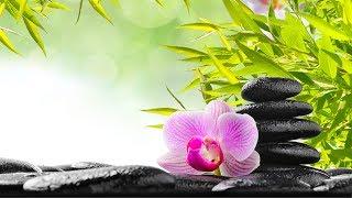 Música para Meditação Zen, Música Relaxante, Música de aleviar o estresse, Música de Fundo, ☯3256