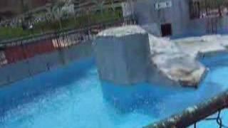 円山動物園のトド、ラーズです。 呼べば寄ってくるかわいいヤツです.