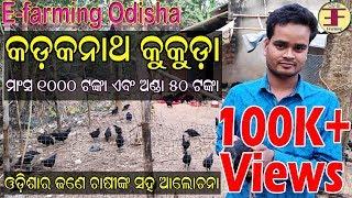 Kadaknath Chicken Farming in Odisha(Discussion with a farmer).
