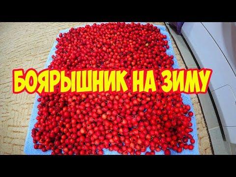Что можно сделать из ягод боярышника на зиму в домашних условиях