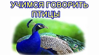 Развивающее видео для детей от года. Птицы. Мультик про животных