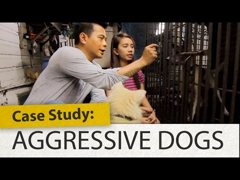 Case Study: Aggressive Dogs | Woofcam