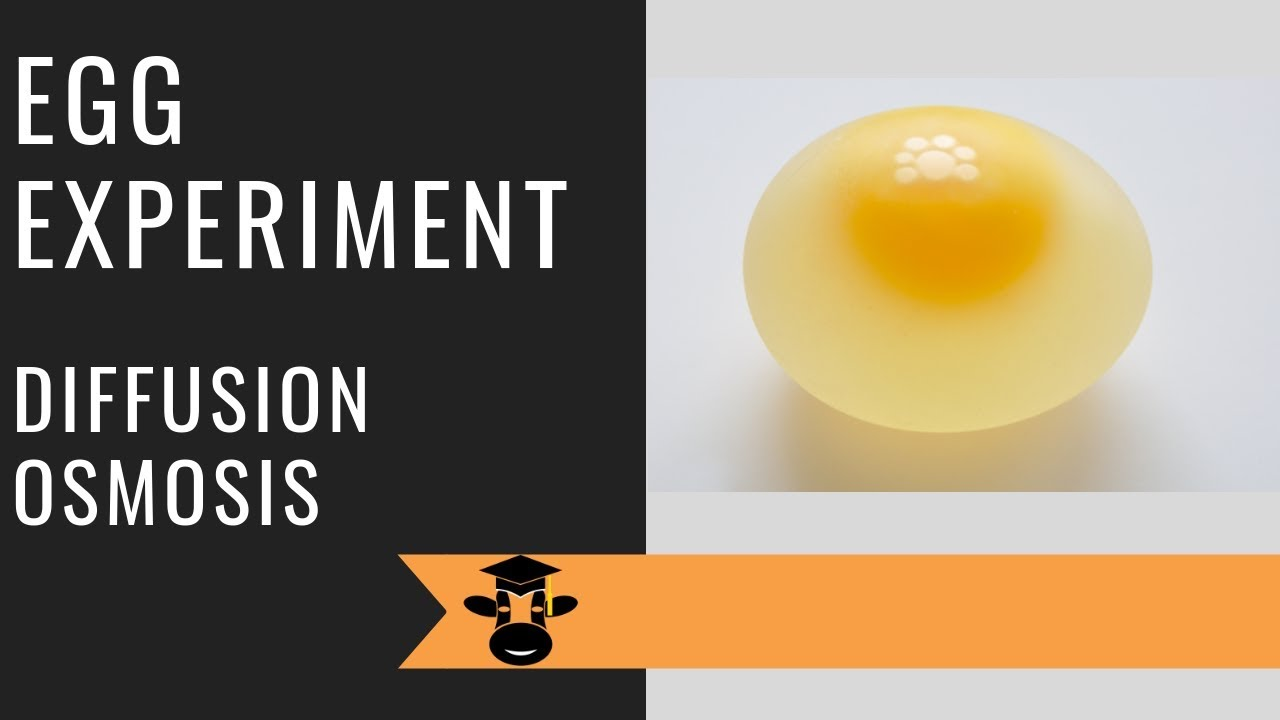 Egg experiment demonstrates osmosis and diffusion - YouTube