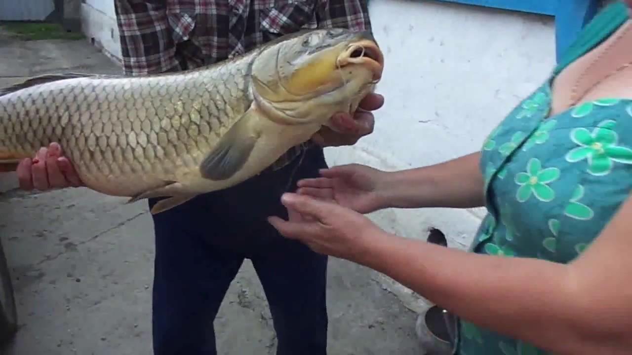 Рыбалка Интеллектуальная задача