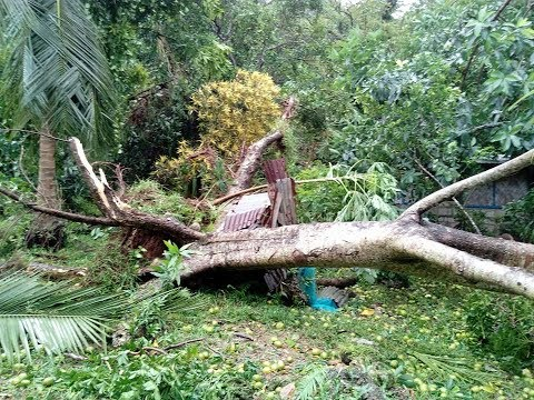 Malakula hit by Tropical cyclone Hola , vanuatu hit by cyclone Hola