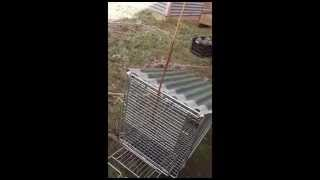 Shopping trolley fox trap