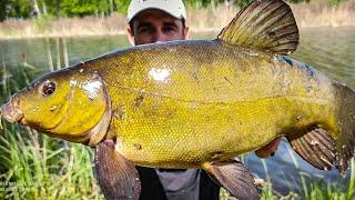 Нашел ЛОГОВО ЛИНЯ ОГРОМНЫЙ ЛИНЬ на УДОЧКУ Рыбалка на линя ловля линя рыба линь Линь