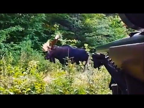 Maine Moose Hunt – September 2018