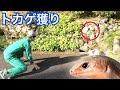 爬虫類YouTuber3人でトカゲ獲りをしてみた!!!【えまっすー】