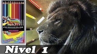 Dibujo Realista con Colores Escolares NIVEL 1 | ART CHALLENGE Realistic Drawing | PRISMACOLOR