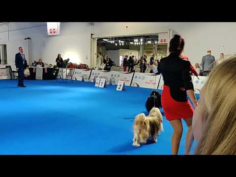 Euro Dog Show 2018 Tibetan Terrier Veteran females (part 1 of 2)