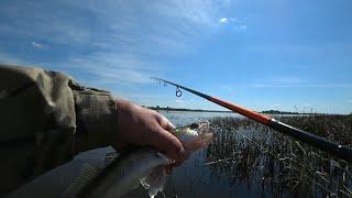 Ловля окуня и судака на убойную оснастку Рыбалка на Оке