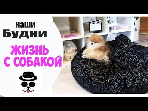 Вопрос: Какой лежак для собак, мягкий мешок, лучше всего подойдет для корги?