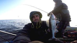 Ловля судака в отвес и не только, Рыбалка 2020, Судак