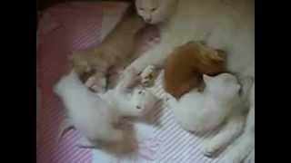Funny cats video (Мама-кошка и котята)