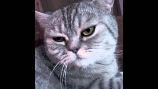 Как быстро разбудить кота 😺😺😺