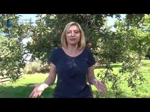 Kleine Angst: Was du von Apfelbäumen über Perfektion lernen kannst