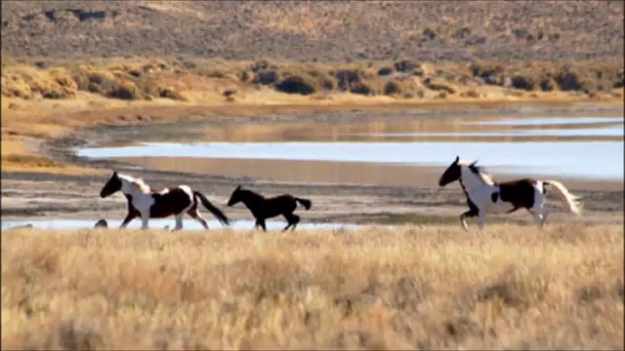 Sheldon Horses
