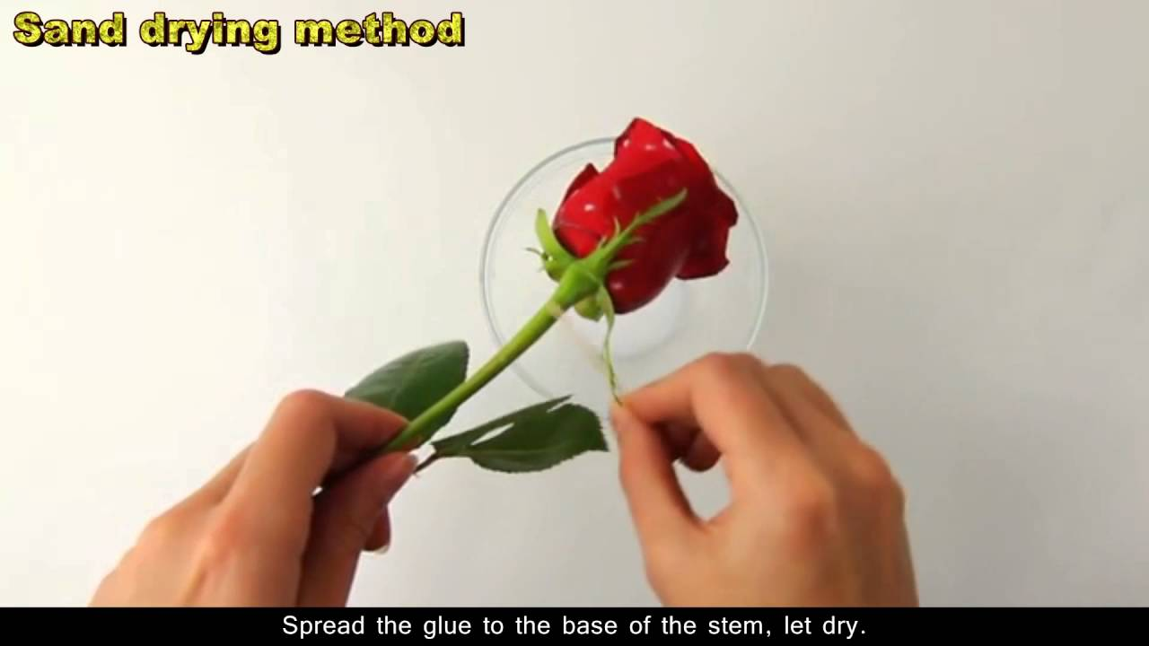 How to dry roses youtube reviewsmspy