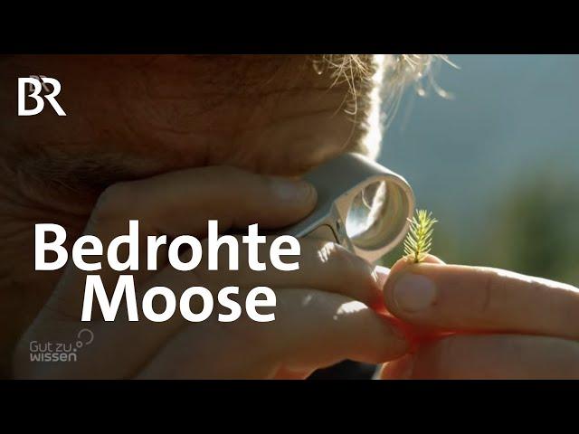 Klimawandel: Hohe Temperaturen, Feinstaub oder Dünger lassen Moose absterben | Gut zu wissen | BR
