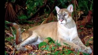 Самые редкие животные мира. Их в этом видео не много, но эти животные очень даже популярны