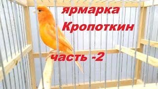 Ярмарка Кропоткин28.03.21г,часть-2. Редкие виды канареек
