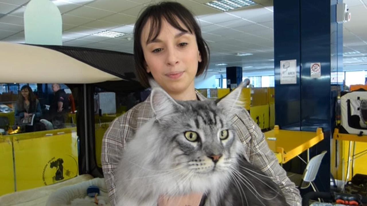Sanremo Alla Mostra Felina Cè Anche Una Razza Nuova Il Gatto