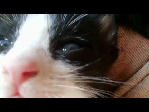 Download 95+  Gambar Kucing Hitam Putih Imut Terbaru HD