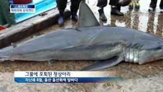 [KNN 뉴스] 식인 상어 잦은 출현, 해수욕장 비상