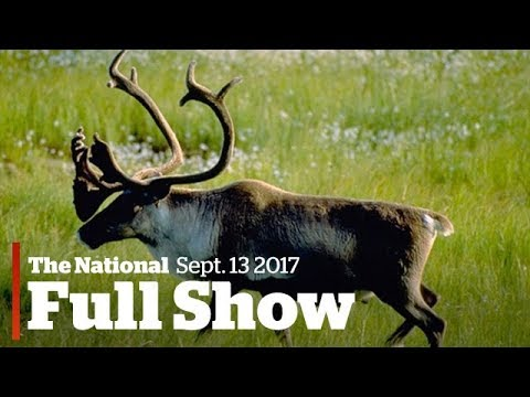The National for Wednesday September 13, 2017: Canadian wildlife decline, Irma, Alberta wildfire