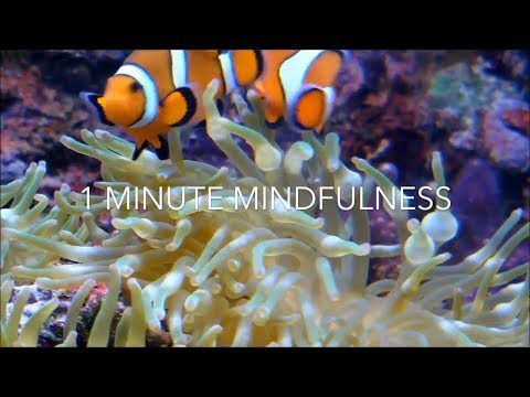 1 Minute Mindfulness Practice - Finding Nemo