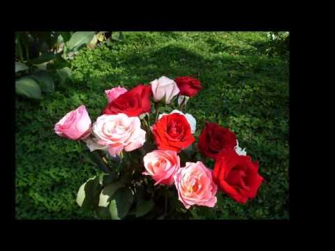 Я розы тебе не дарил тебе цветов