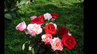 📌 Ах... Эти розы, я дарю тебе...