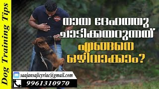 How to Train Dogs not to Jump on You & Other People? Saajan K9 Training School