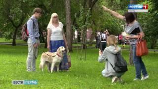Обнять собаку и помочь бездомным животным