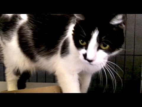 Killean the Moo Cat With A Sensitive Tummy - YouTube