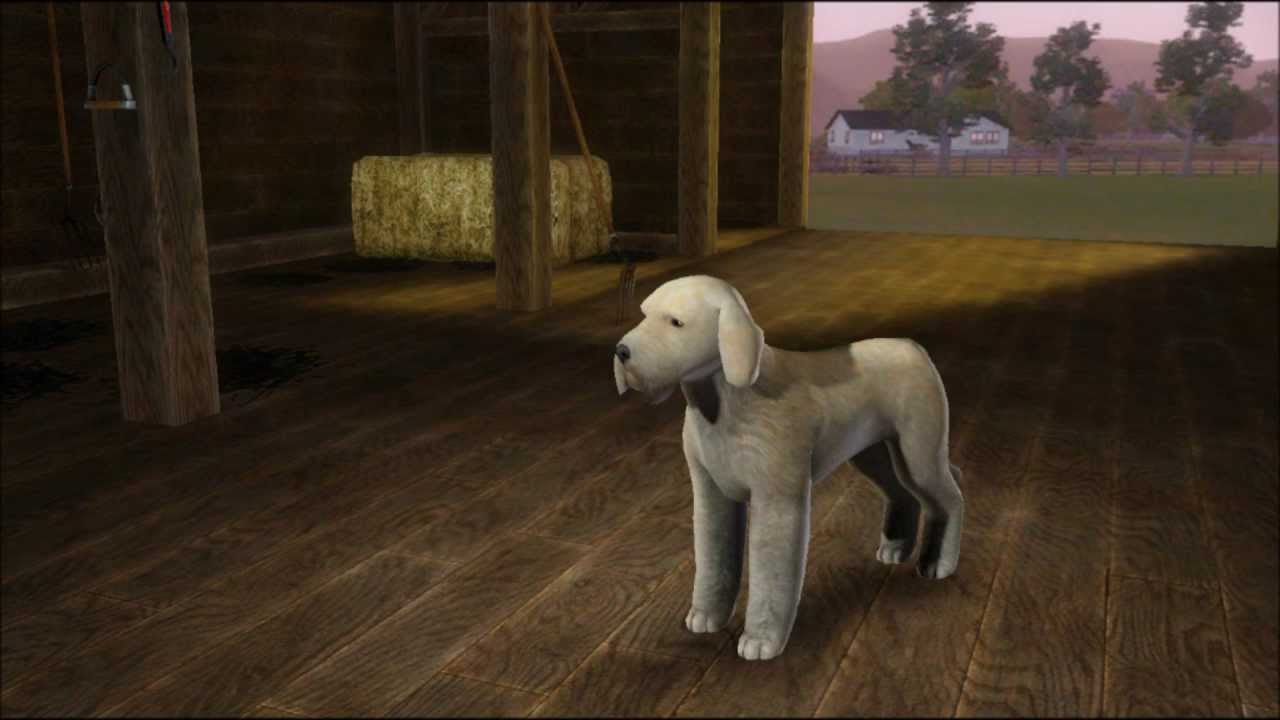 How To Adopt Dogs In The Sims