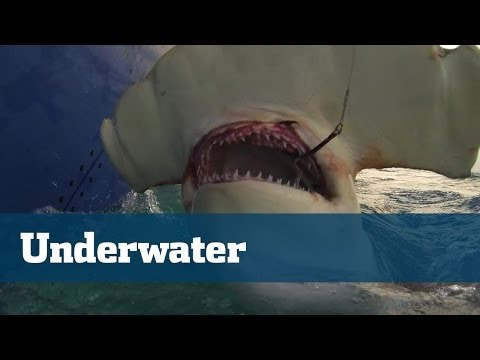 Underwater Footage  Compilation Sharks Dolphin Sailfish More - Florida Sport Fishing TV