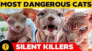 TOP 10 MOST DANGEROUS CAT BREEDS