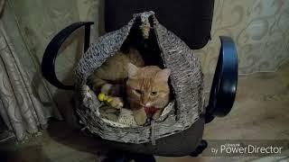 Домик для кота сплетенный из бумаги