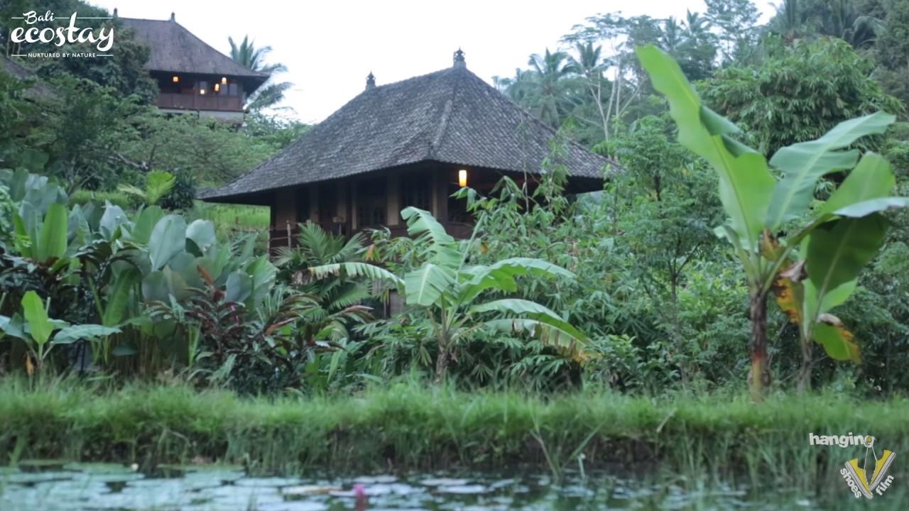 Little Padi Bungalow Bali Eco Stay Youtube