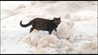 В Уфе замуровали котят