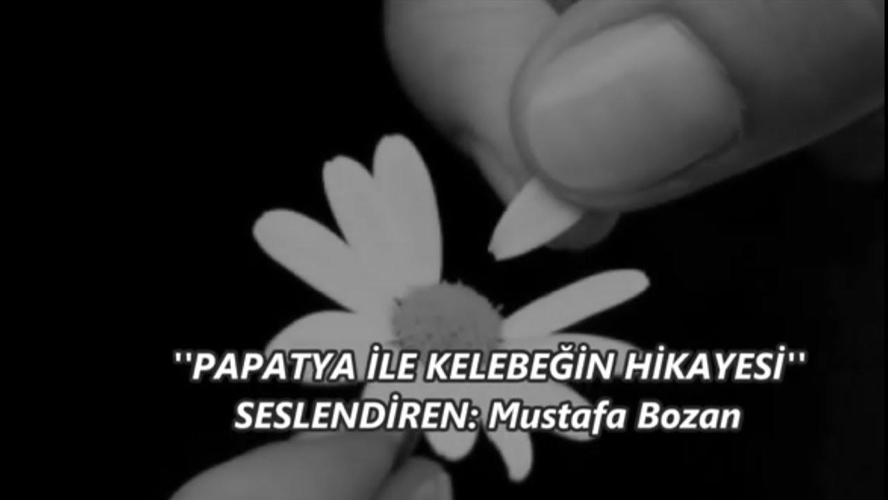 Mustafa Bozan Papatya ile Kelebeğin Hikayesi