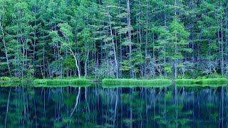 長野県茅野市、蓼科高原にあるため池、日本画の巨匠・東山魁夷の「緑響...