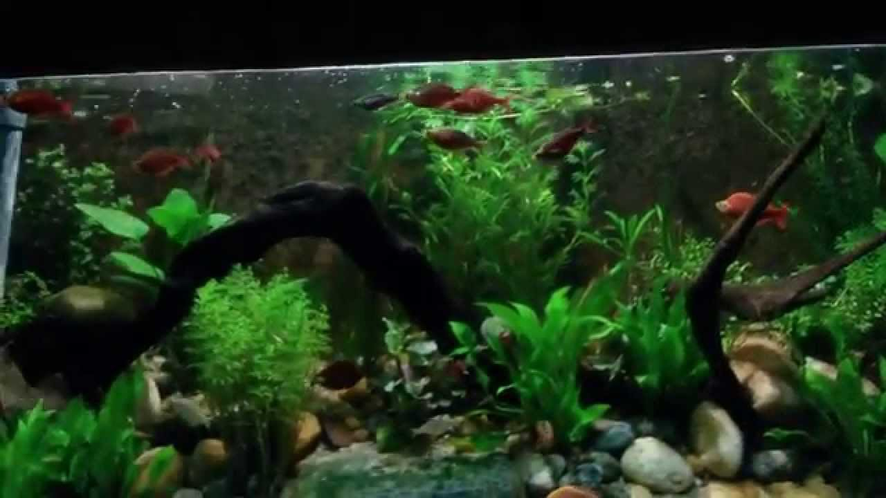 Fish aquarium in sri lanka - The Aquarium Dehiwala Zoo Sri Lanka