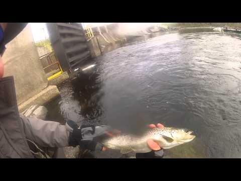 Fly fishing for landlock salmon moosehead river maine for Maine out of state fishing license