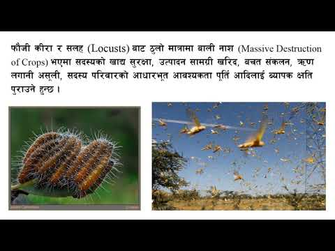 कृषि सहकारीमा जाेखिम Risks in agricultural coop